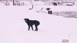 Люди приходят на помощь зверям смотреть видео - 7:59