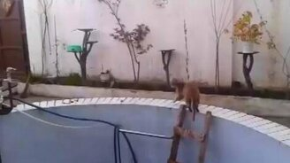Спасение кошака из бассейна смотреть видео прикол - 0:47