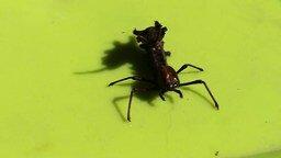 Смотреть Странное насекомое