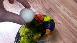 Смотреть Забавный яркий попугайчик