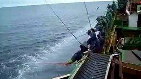 Как промысловики тунца ловят смотреть видео прикол - 4:03