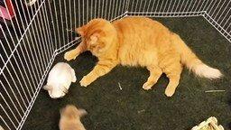 Смотреть Кошка нянчит кроликов