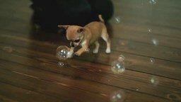Смотреть Щенок и мыльные пузыри