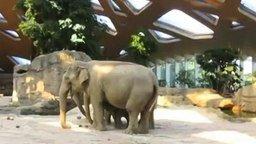 Смотреть Слоновья взаимовыручка