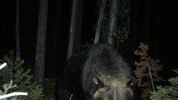 Медведь атаковал камеру смотреть видео прикол - 0:10