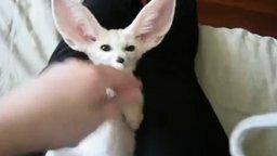 Смотреть Забавный белый ушастик