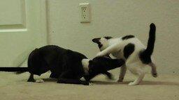 Смотреть Резвый пёс играет с котёнком