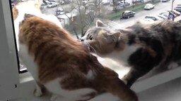 Кошка-паникёрша смотреть видео прикол - 0:10