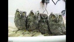 Зависшие совы смотреть видео прикол - 0:29