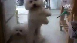 Смотреть Собака танцует диско