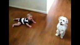 Смотреть Позитив с малышами и собаками