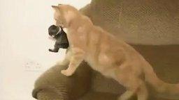Смотреть Кошка усыновила кролика