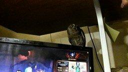 Как совы реагируют на прикосновения смотреть видео прикол - 1:55