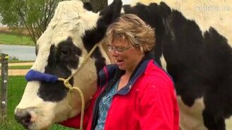 Самая большая в мире корова смотреть видео прикол - 0:43