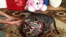 Смотреть Кошка думает, что она собака