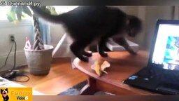 Смотреть Весёлые и нелепые кошки