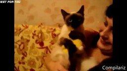 Большая подборка кошачьих курьёзов смотреть видео прикол - 14:15