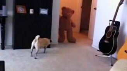 Напугали собаку - получите награду смотреть видео прикол - 0:50
