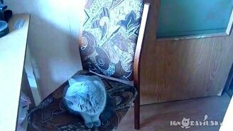 Послушный кот закрывает дверь