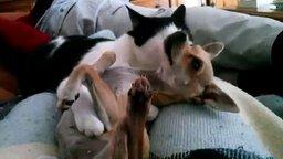 Смотреть Как кошка с собакой