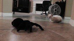 Котёнок против гигантского паука смотреть видео прикол - 1:37