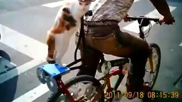 Смотреть Разные смешные кошки