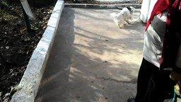 Пёс-игрун и пластиковый стаканчик смотреть видео прикол - 0:22