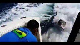 Смотреть Морской лев приплыл в гости на катер