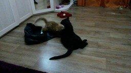 Смотреть Кошка, котёнок и пакет