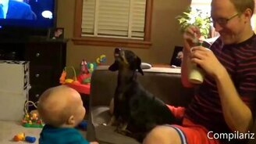Смотреть Весёлые собаки и детишки