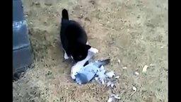 Голубь-притвора и кот смотреть видео прикол - 0:19