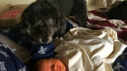 Смотреть Пёс укутывает сонного малыша