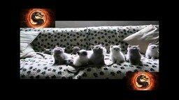 Смотреть Синхронные котята
