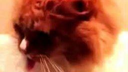 Смотреть Кот реагирует на скотч