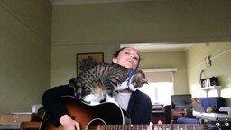 Смотреть Дуэт девушки и кота