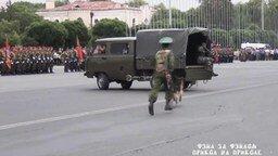 Смотреть Верный пёс солдата