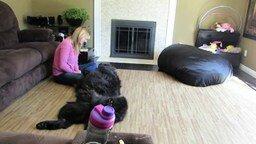 Смотреть Пёс просит хозяйку, чтобы она его гладила