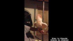 Смотреть Попугая колбасит