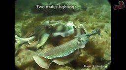 Смотреть Дэвид Галло - Подводные чудеса
