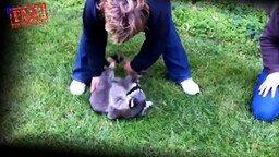 Смотреть Смешные ролики с енотами