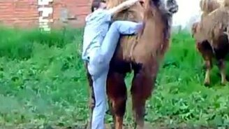 Парень против верблюда смотреть видео прикол - 1:06