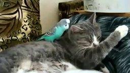 Говорливый попугай и терпеливый котяра смотреть видео прикол - 3:40