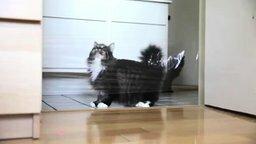 Короткий розыгрыш кота смотреть видео прикол - 0:24