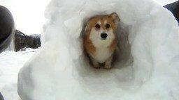Смотреть Снежный тоннель для питомца
