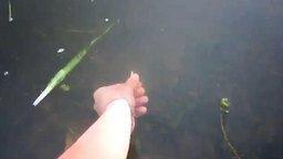Смотреть Поймал рыбу голой рукой