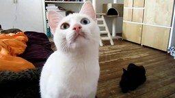 Смотреть Кот, зубами щёлк!