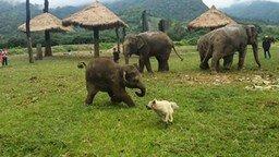 Слонёнок и собака смотреть видео прикол - 0:54