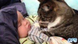 Смотреть Кошки и детишки