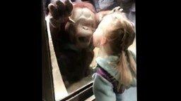 Смотреть Дети и животные в зоопарке
