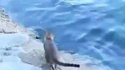 Удачливый кот-рыболов смотреть видео прикол - 1:09